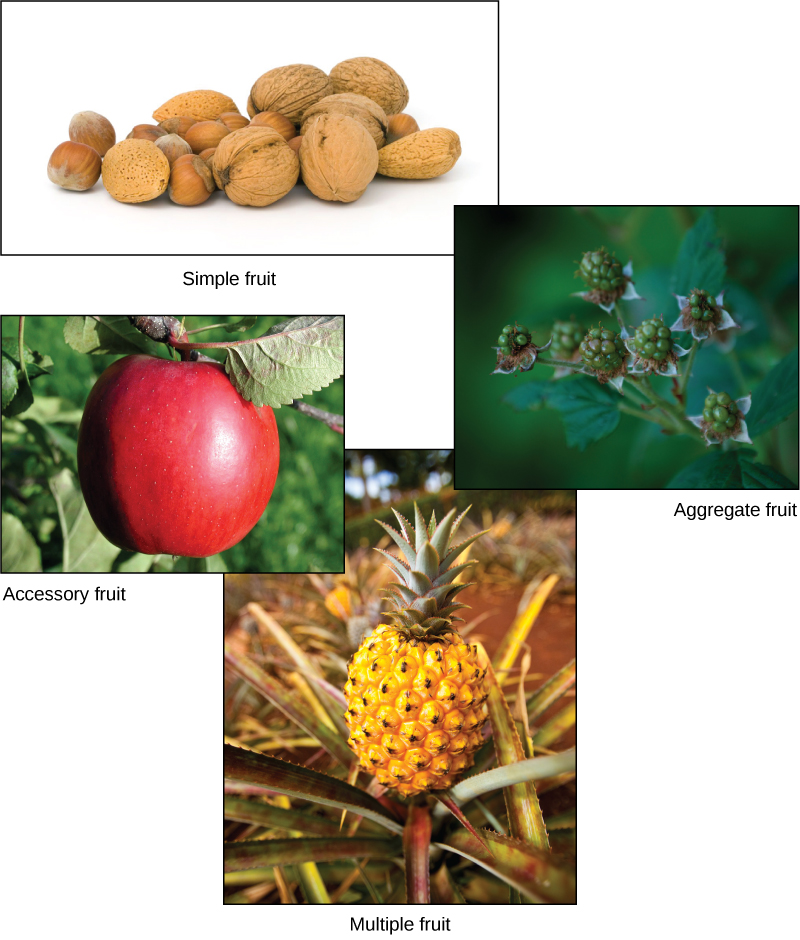 Photos depict a variety of nuts in their shells, an apple, raspberries and a pineapple.