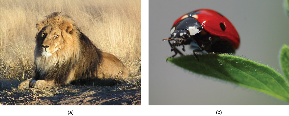 The first photo shows a lion. The next photo shows a ladybug.