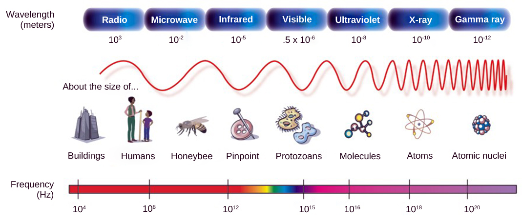 The illustration shows the electromagnetic spectrum, which consists of different wavelengths of electromagnetic radiation. Radio waves have the longest wavelength, about 103 meters. Wavelength gets increasingly shorter for microwave, infrared, visible, ultraviolet, x rays and gamma rays. Gamma rays have a wavelength of about 10 to 12 meters. Frequency is inversely proportional to wavelength.