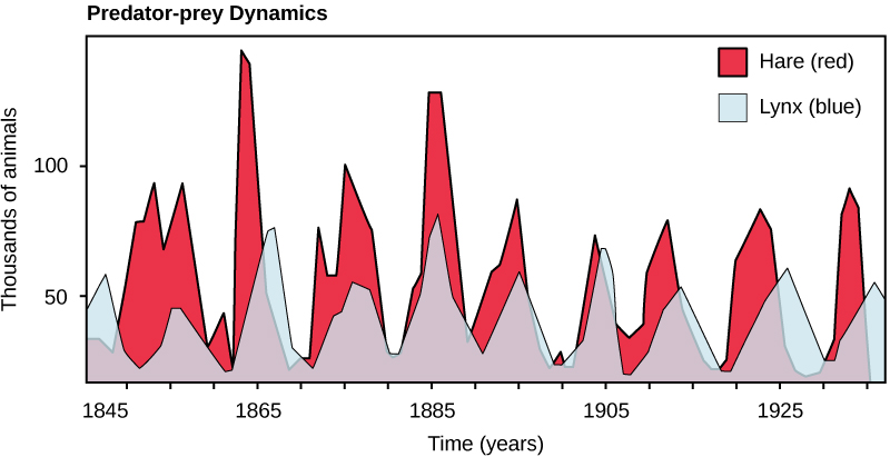 The graph plots number of animals, either hare or lynx, in thousands versus time in years. The number of hares fluctuates between 10,000 at the low points, and 75,000 to 150,000 at the high points. There are typically fewer lynxes than hares, but the trend in number of lynxes follows the number of hares; meaning that more hares trends to more lynx as well