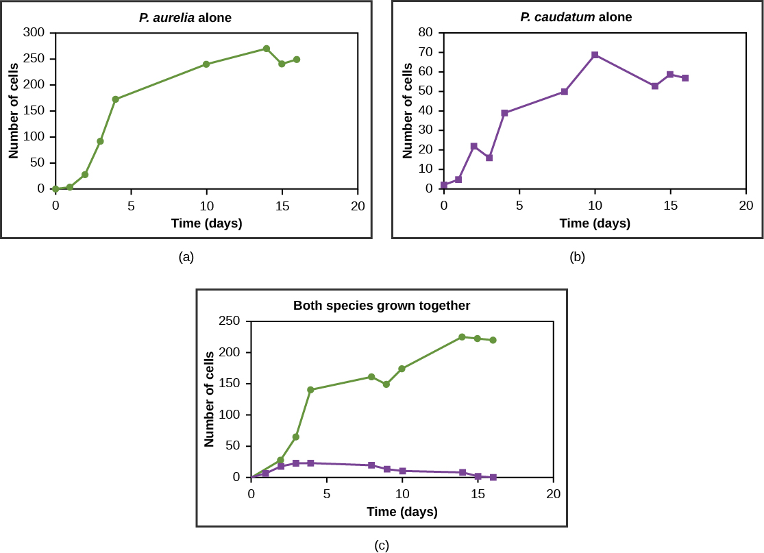 Graphs a, b, and c all plot number of cells versus time in days. In Graph (a), P. aurelia is grown alone. In graph (b), P. caudatum is grown alone. In graph (c), both species are grown together. When grown apart, the two species both exhibit logistic growth and grow to a relatively high cell density. When the two species are grown together, P. aurelia shows logistic growth to nearly the same cell density as it exhibited when grown alone, but P. caudatum hardly grows at all, and eventually its population drops to zero.
