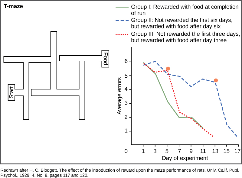 A diagram shows a rat maze that has several turns and dead ends. Next to this maze is a graph showing the average error of the rats navigating the maze plotted versus the day of the experiment. Rats that are rewarded at the end of each run learn the maze quickly, and the number of errors they make in navigating the maze rapidly drops from six on day one to one on day eleven. Rats that are not rewarded on the first three days but are rewarded after day three learn the maze slowly at first, but quickly after the reward is present. Rats that are not rewarded on the first six days but are rewarded after day six gradually reduce the number of errors over the first three days, but rapidly reduce their errors after an award is present.