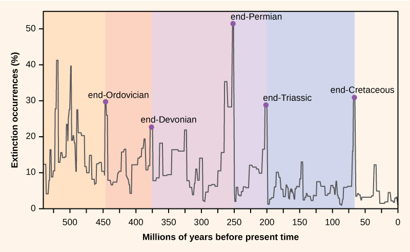 The graph plots percent extinction occurrences versus time in millions of years before present time, starting 550 million years ago. Extinction occurrences increase and decrease in a cyclical manner. At the lowest points on the cycle, extinction occurrences were between 2% and 5% percent. Spikes in the number of extinctions occurred at the end of geological periods: end-Ordovician, 450 million years ago; end-Devonian, 374 million years ago; end-Permian, 252 million years ago; end-Triassic, 200 million years ago; and end-Cretaceous, 65 million years ago. During these spikes, extinction occurrences approximately ranged from 22% to 50%.