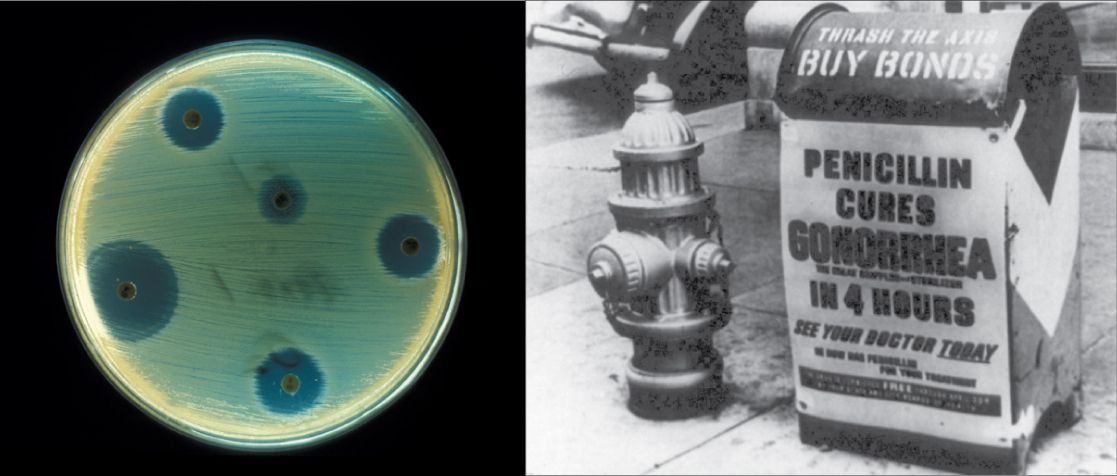 The right side of this image is an old black and white photo of a mailbox plastered with an advertisement that says, Penicillin cures gonorrhea in four hours. See your doctor today. The left side of the image shows a petri dish streaked with bacteria. Bacteria grow everywhere on the plate except where discs containing antibiotic have been placed. These areas are completely devoid of bacterial growth