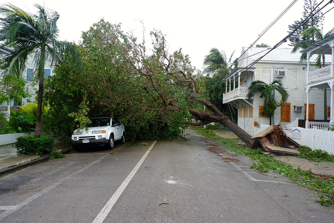 A photograph shows a large tree that has fallen over onto a parked car.