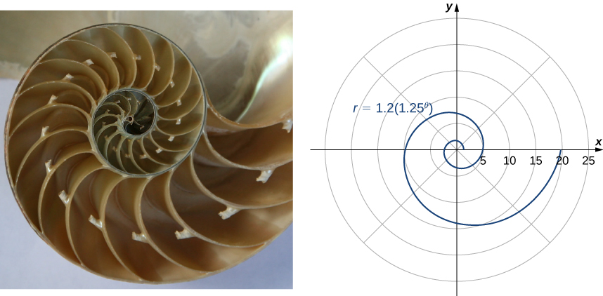 This figure has two figures. The first is a shell with many chambers that increase in size from the center out. The second is a spiral with equation r = 1.2(1.25θ).