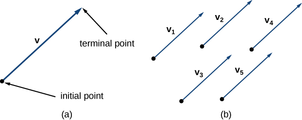 """This figure has two images. The first is labeled """"a"""" and has a line segment representing vector v. The line segment begins at the initial point and goes to the terminal point. There is an arrowhead at the terminal point. The second image is labeled """"b"""" and is five vectors, each labeled v sub 1, v sub 2, v sub 3, v sub 4, v sub 5. They all are pointing in the same direction and have the same length."""