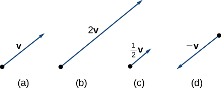"""This graphic has 4 figures. The first figure is a vector labeled """"v."""" The second figure is a vector twice as long as the first vector and is labeled """"2 v."""" The third figure is half as long as the first and is labeled """"1/2 v."""" The fourth figure is a vector in the opposite direction as the first. It is labeled """"-v."""""""