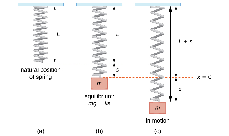 This figure has three images of springs. The first image is a vertical spring in its natural position with length L attached at the top to a fixed point. The second image shows a vertical spring with a mass m attached to the spring, stretching the spring distance s from L. The spring is in equilibrium. The third image is a vertical spring with mass m attached where the spring is in motion, distance x from equilibrium L + s.