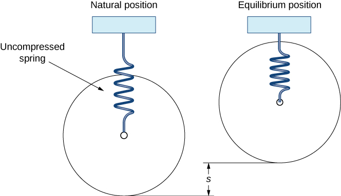 """This figure has two springs attached above at a fixed point. The first spring is labeled, """"Natural Position,"""" and has an uncompressed spring hanging vertically. The second spring is labeled, """"Equilibrium Position,"""" and has a compressed spring hanging vertically. The vertical difference between the two springs is labeled, """"s."""""""
