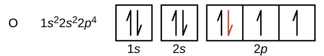 """This figure includes the element symbol O followed by the electron configuration 1 s superscript 2 2 s superscript 2 2 p superscript 4. An orbital diagram follows, which consists of two individual squares, labeled as, """"1 s,"""" and, """"2 s,"""" below followed by a grouping of three connected squares which are labeled, """"2 p."""" All boxes are oriented in a row. The two individual squares and the first square in the row of connected squares contain a pair of half arrows. One half arrow in each pair points up, and one points down. The downward pointing arrow in the first square in the row of connected squares is red. The remaining two squares each contain single upward pointing half arrows."""