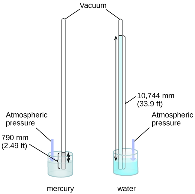"This figure shows two barometers. The barometer to the left contains a shallow reservoir, or open container, of mercury. A narrow tube extends upward from the reservoir above the reservoir. This tube is sealed at the top. To the right, a second similar setup is shown with a reservoir filled with water. Line segments connect the label ""vacuum"" to the tops of the two narrow tubes. The tube on the left shows the mercury in the reservoir extending in a column upward in the narrow tube. Similarly, the tube on the right shows the water in the reservoir extending upward into the related narrow tube. Double-headed arrows extend from the surface of each liquid in the reservoir to the top of the liquid in each tube. A narrow column or bar extends from the surface of the reservoir to the same height. This bar is labeled ""atmospheric pressure."" The level of the water in its tube is significantly higher than the level of mercury in its tube."