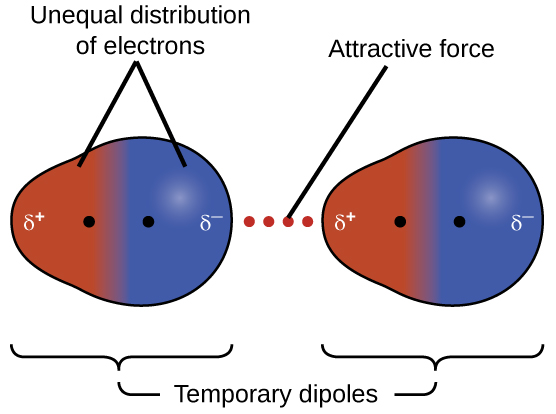 """Two pairs of molecules are shown where each molecule has one larger blue side labeled """"delta sign, negative sign"""" and a smaller red side labeled """"delta sign, positive sign."""" Toward the middle of the both molecules, but still on each distinct side, is a black dot. Between the two images is a dotted line labeled, """"Attractive force."""" In the first image, the red and blue sides are labeled, """"Unequal distribution of electrons."""" Below both images are brackets. The brackets are labeled, """"Temporary dipoles."""""""
