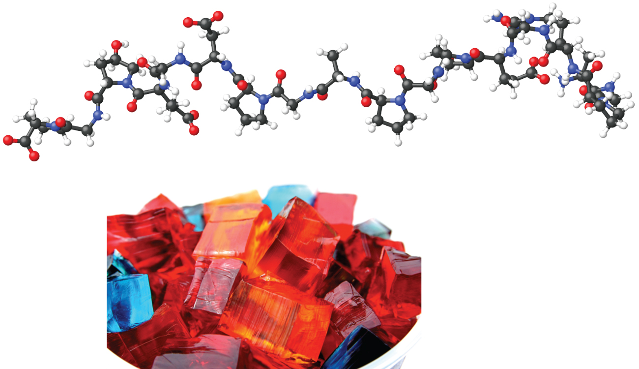 In this figure, a large molecular model of gelatin is shown with black carbon atoms, red oxygen atoms, white hydrogen atoms, and blue nitrogen atoms. A photo is shown of gelatin dessert cut into colorful rectangles.