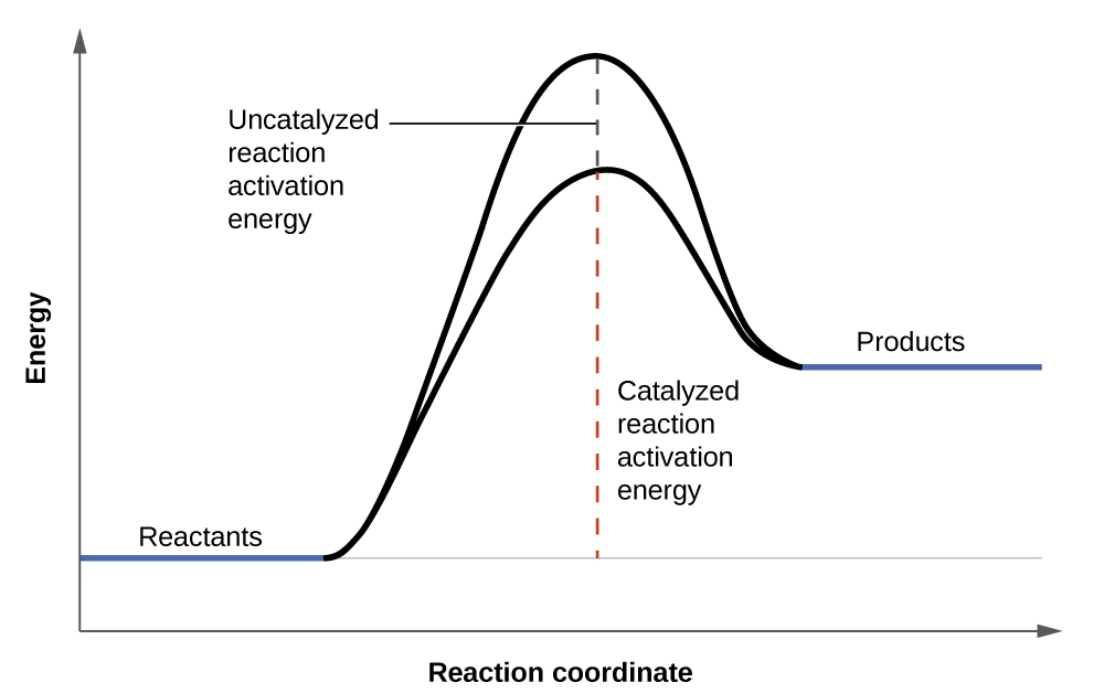 "chemistry lab report on concentration affecting end product in electrolysis There is no report yet on alternative catalysts that allow one to abandon the   consists of layers of carbon ending in a ~1-nm-wide sharp tip (fig  catalysts"" for  chemical processes including ammonia synthesis by influencing n2's  and the  ammonia product was quantified using a quantification protocol."