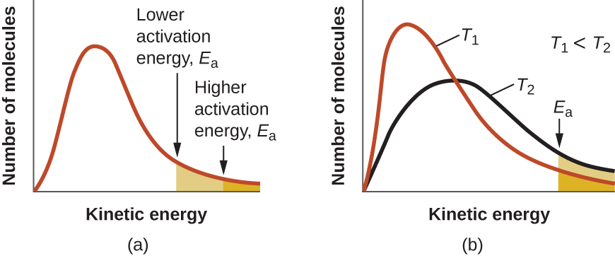 "Two graphs are shown each with an x-axis label of ""Kinetic energy"" and a y-axis label of ""Fraction of molecules."" Each contains a positively skewed curve indicated in red that begins at the origin and approaches the x-axis at the right side of the graph. In a, a small area under the far right end of the curve is shaded orange. An arrow points down from above the curve to the left end of this region where the shading begins. This arrow is labeled, ""Higher activation energy, E subscript a."" In b, the same red curve appears, and a second curve is drawn in black. It is also positively skewed, but reaches a lower maximum value and takes on a broadened appearance as compared to the curve in red. In this graph, the red curve is labeled, ""T subscript 1"" and the black curve is labeled, ""T subscript 2."" In the open space at the upper right on the graph is the label, ""T subscript 1 less than T subscript 2."" As with the first graph, the region under the curves at the far right is shaded orange and a downward arrow labeled ""E subscript a"" points to the left end of this shaded region."