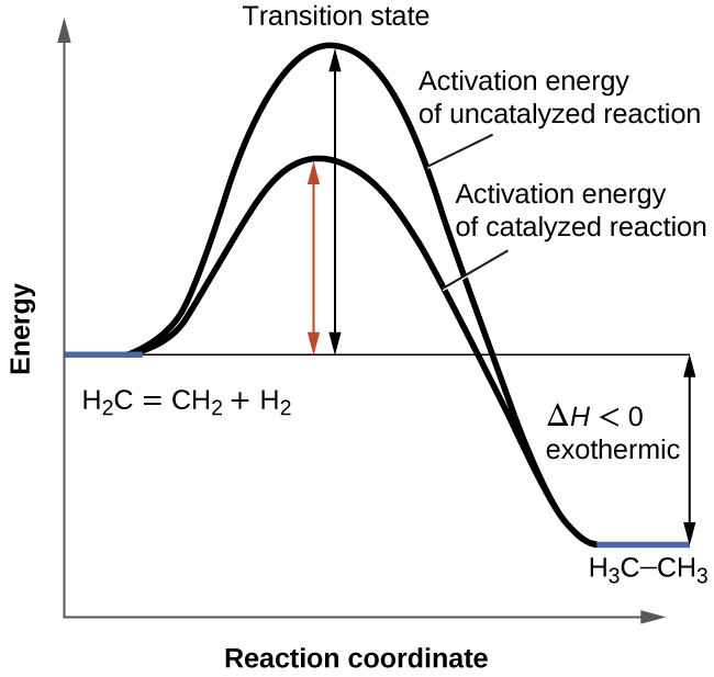 12.7 Catalysis | Chemistry