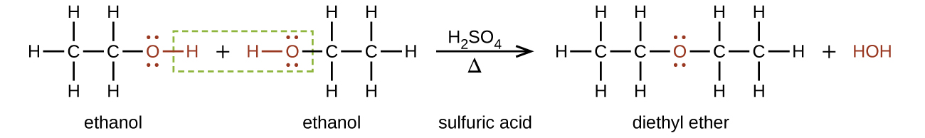 "This figure shows a reaction. The first molecule, which is labeled, ""ethanol,"" is a two C atom chain. The first C atom is bonded to three H atoms and a second C atom. The second C atom is bonded to a red O atom with two sets of electron dots. The O atom has a red bond to a red H atom. There is a plus sign. The next molecule, which is labeled, ""ethanol,"" is a red H atom with a red bond to a red O atom with two pairs of electron dots. The O atom is bonded to a C atom which is bonded to two H atoms and a second C atom. The second C atom is bonded to three H atoms. There is a green dotted box around the red H atom in the first molecule, the plus sign, and the red H and O atoms in the second molecule. To the right o the second molecule there is an arrow labeled H subscript 2 S O subscript 4 above and Greek capital delta below. The arrow is labeled, ""sulfuric acid."" The resulting molecules are a C atom bonded with three H atoms and a second C atom. The second C atom is bonded to two H atoms and a red O atom. The red O atom has two sets of electron dots. The O atom is bonded to a third C atom which is bonded to two H atoms and a fourth C atom. The fourth C atom is bonded to three H atoms. This molecule is labeled, ""diethyl ether."" There is a plus sign and a red H O H."