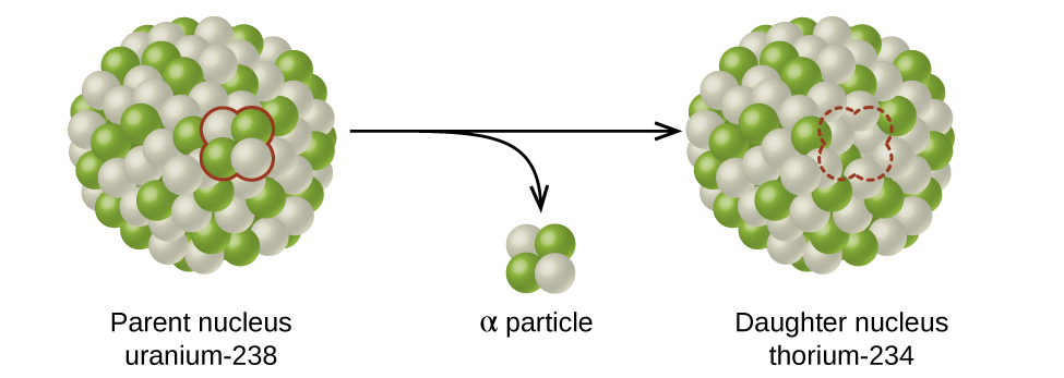 "A diagram shows two spheres composed of many smaller white and green spheres connected by a right-facing arrow with another, down-facing arrow coming off of it. The left sphere, labeled ""Parent nucleus uranium dash 238"" has two white and two green spheres that are near one another and are outlined in red. These two green and two white spheres are shown near the tip of the down-facing arrow and labeled ""alpha particle."" The right sphere, labeled ""Daughter nucleus radon dash 234,"" looks the same as the left, but has a space for four smaller spheres outlined with a red dotted line."