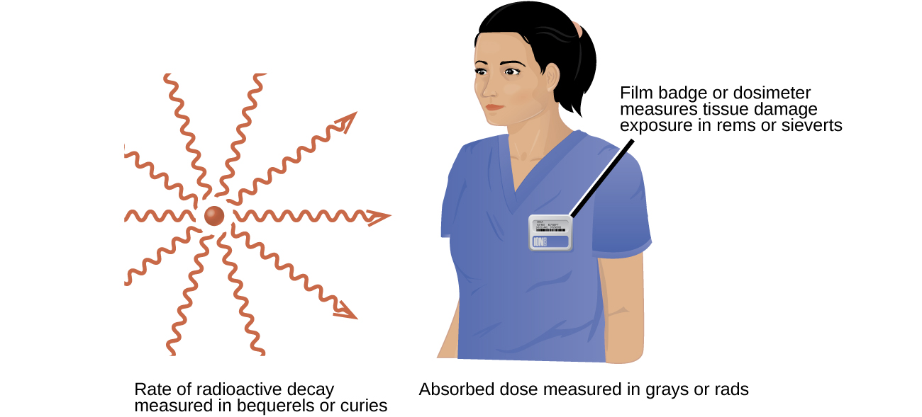 "Two images are shown. The first, labeled ""Rate of radioactive decay measured in becquerels or curies,"" shows a red sphere with ten red squiggly arrows facing away from it in a 360 degree circle. The second image shows the head and torso of a woman wearing medical scrubs with a badge on her chest. The caption to the badge reads ""Film badge or dosimeter measures tissue damage exposure in rems or sieverts"" while a phrase under this image states ""Absorbed dose measured in grays or rads."""