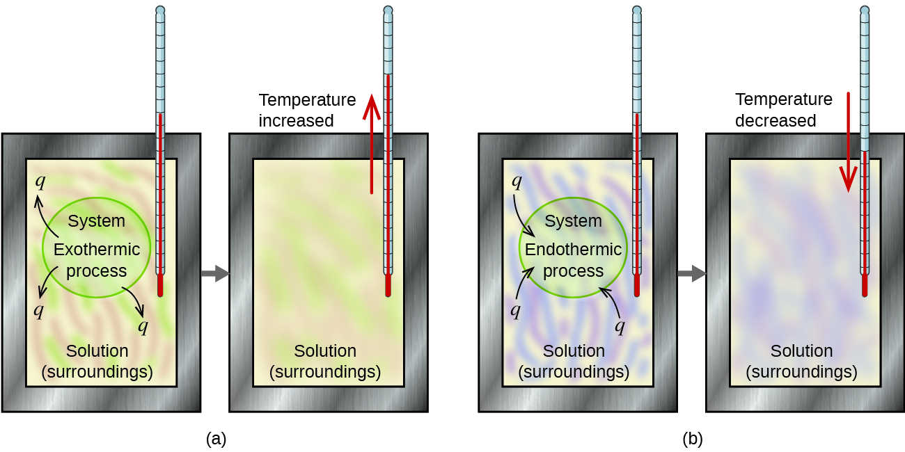 """Two diagrams labeled a and b are shown. Each is made up of two rectangular containers with a thermometer inserted into the top right and extending inside. There is a right facing arrow connecting each box in each diagram. The left container in diagram a depicts a pink and green swirling solution with the terms """"Exothermic process"""" and """"System"""" written in the center with arrows facing away from the terms pointing to """"q."""" The labels """"Solution"""" and """"Surroundings"""" are written at the bottom of the container. The right container in diagram a has the term """"Solution"""" written at the bottom of the container and a red arrow facing up near the thermometer with the phrase """"Temperature increased"""" next to it. The pink and green swirls are more blended in this container. The left container in diagram b depicts a purple and blue swirling solution with the terms """"Endothermic process"""" and """"System"""" written in the center with arrows facing away from the terms and """"Solution"""" and """"Surroundings"""" written at the bottom. The arrows point away from the letter """"q."""" The right container in diagram b has the term """"Solution"""" written at the bottom and a red arrow facing down near the thermometer with the phrase """"Temperature decreased"""" next to it. The blue and purple swirls are more blended in this container."""