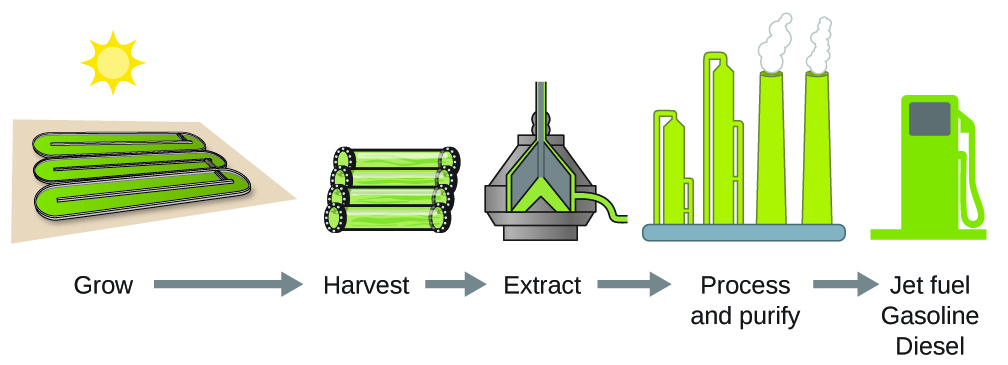 """A flowchart is shown that contains pictures and words. Reading from left to right, the terms """"Grow,"""" """"Harvest,"""" """"Extract,"""" """"Process and purify,"""" and """"Jet fuel gasoline diesel"""" are shown with right-facing arrows in between each. Above each term, respectively, are diagrams of three containers, three cylinders lying side-by-side, a pyramid-like container with liquid inside, a factory, and a fuel pump. In the space above all of the diagrams and to the left of the images is a diagram of the sun."""