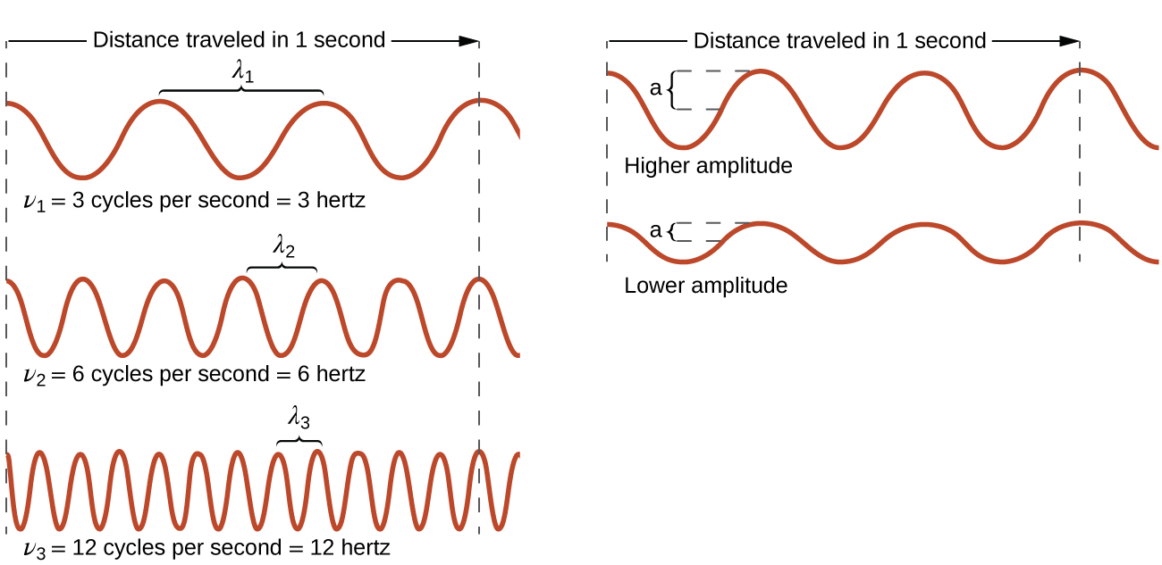 """This figure includes 5 one-dimensional sinusoidal waves in two columns. The column on the left includes three waves, and the column on the right includes two waves. In each column, dashed vertical line segments extend down the left and right sides of the column. A right pointing arrow extends from the left dashed line to the right dashed line in both columns and is labeled, """"Distance traveled in 1 second."""" The waves all begin on the left side at a crest. The wave at the upper left shows 3 peaks to the right of the starting point. A bracket labeled, """"lambda subscript 1,"""" extends upward from the second and third peaks. Beneath this wave is the label, """"nu subscript 1 equals 4 cycles per second equals 3 hertz."""" The wave below has six peaks to the right of the starting point with a bracket similarly connecting the third and fourth peaks which is labeled, """"lambda subscript 2."""" Beneath this wave is the label, """"nu subscript 2 equals 8 cycles per second equals 6 hertz"""" The third wave in the column has twelve peaks to the right of the starting point with a bracket similarly connecting the seventh and eighth peaks which is labeled, """"lambda subscript 3."""" Beneath this wave is the label, """"nu subscript 3 equals 12 cycles per second equals 12 hertz."""" All waves in this column appear to have the same vertical distance from peak to trough. In the second column, the two waves are similarly shown, but lack the lambda labels. The top wave in this column has a greater vertical distance between the peaks and troughs and is labeled, """"Higher amplitude."""" The wave beneath it has a lesser distance between the peaks and troughs and is labeled, """"Lower amplitude."""""""