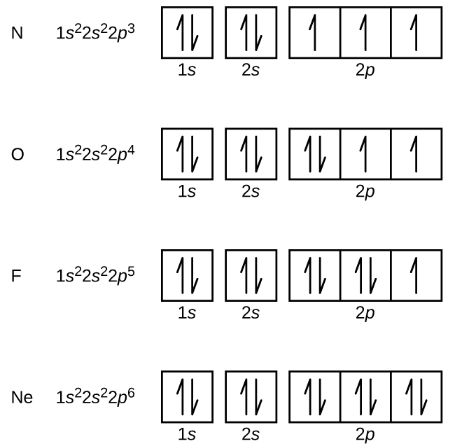 """This figure includes electron configurations and orbital diagrams for four elements, N, O, F, and N e. Each diagram consists of two individual squares followed by 3 connected squares in a single row. The first square is labeled below as, """"1 s."""" The second is similarly labeled, """"2 s."""" The connected squares are labeled below as, """"2 p."""" All squares not connected to each other contain a pair of half arrows: one pointing up and the other down. For the element N, the electron configuration is 1 s superscript 2 2 s superscript 2 2 p superscript 3. Each of the squares in the group of 3 contains a single upward pointing arrow for this element. For the element O, the electron configuration is 1 s superscript 2 2 s superscript 2 2 p superscript 4. The first square in the group of 3 contains a pair of arrows and the last two squares contain single upward pointing arrows. For the element F, the electron configuration is 1 s superscript 2 2 s superscript 2 2 p superscript 5. The first two squares in the group of 3 each contain a pair of arrows and the last square contains a single upward pointing arrow. For the element N e, the electron configuration is 1 s superscript 2 2 s superscript 2 2 p superscript 6. The squares in the group of 3 each contains a pair of arrows."""