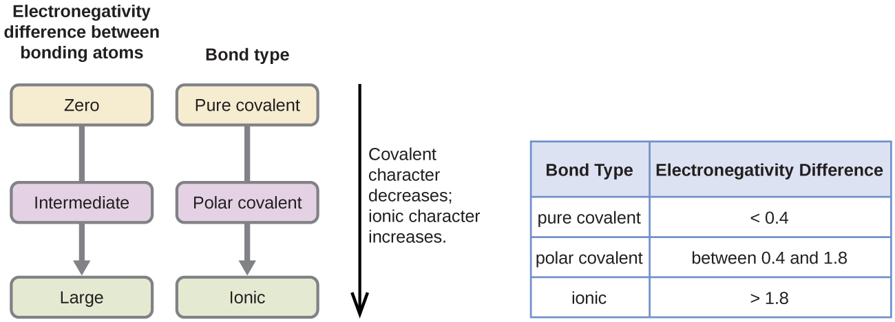 """Two flow charts and table are shown. The first flow chart is labeled, """"Electronegativity difference between bonding atoms."""" Below this label are three rounded text bubbles, connected by a downward-facing arrow, labeled, """"Zero,"""" """"Intermediate,"""" and """"Large,"""" respectively. The second flow chart is labeled, """"Bond type."""" Below this label are three rounded text bubbles, connected by a downward-facing arrow, labeled, """"Pure covalent,"""" """"Polar covalent,"""" and """"Ionic,"""" respectively. A double ended arrow is written vertically to the right of the flow charts and labeled, """"Covalent character decreases; ionic character increases."""" The table is made up of two columns and four rows. The header line is labeled """"Bond type"""" and """"Electronegativity difference."""" The left column contains the phrases """"Pure covalent,"""" """"Polar covalent,"""" and """"Ionic,"""" while the right column contains the values """"less than 0.4,"""" """"between 0.4 and 1.8,"""" and """"greater than 1.8."""""""