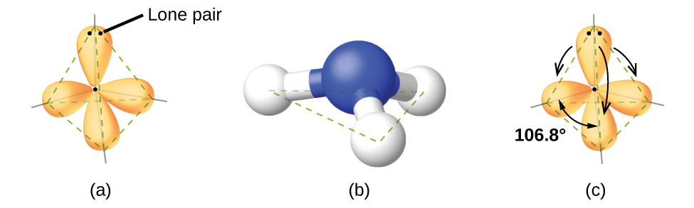 """Three images are shown and labeled, """"a,"""" """"b,"""" and """"c."""" Image a shows a nitrogen atom single bonded to three hydrogen atoms. There are four oval-shaped orbs that surround each hydrogen and one facing away from the rest of the molecule. These orbs are located in a tetrahedral arrangement. Image b shows a ball-and-stick model of the nitrogen single bonded to the three hydrogen atoms. Image c is the same as image a, but there are four curved, double headed arrows that circle the molecule and are labeled, """"106.8 degrees."""""""