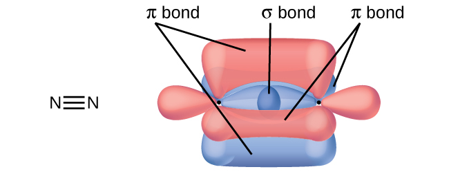 """Two nitrogen atoms are shown both in a Lewis structure and as a diagram. The Lewis structure depicts the two nitrogen atoms bonded by a triple bond. The diagram shows two nitrogen atoms and their three peanut-shaped p-orbitals. One of the orbitals lies horizontally and overlaps between the two nuclei. It is labeled, """"sigma bond."""" The other two lie vertically and in the z-plane of the page. They overlap above and below and into and out of the page in relation to the nuclei. They are each labeled, """"pi bond."""""""