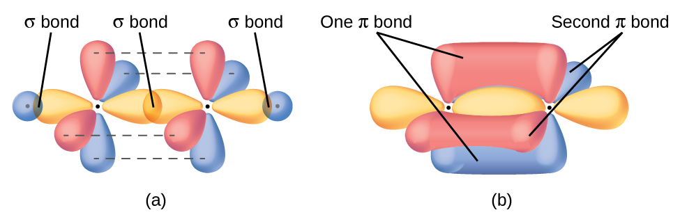 """Two diagrams are shown and labeled, """"a"""" and """"b."""" Diagram a shows two carbon atoms with two purple balloon-like orbitals arranged in a plane around each of them, and four red balloon-like orbitals arranged along the y and z axes perpendicular to the plane of the molecule. There is an overlap of two of the purple orbitals in between the two carbon atoms. The other two purple orbitals that face the outside of the molecule are shown interacting with spherical blue orbitals from two hydrogen atoms. Diagram b depicts a similar image to diagram a, but the red, vertical orbitals are interacting above and below and to the front and back of the plane of the molecule to form two areas labeled, """"One pi bond,"""" and, """"Second pi bond,"""" each respectively."""