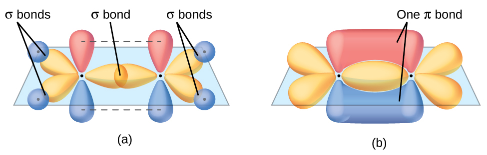 """Two diagrams are shown labeled, """"a"""" and """"b."""" Diagram a shows two carbon atoms with three purple balloon-like orbitals arranged in a plane around them and two red balloon-like orbitals arranged vertically and perpendicularly to the plane. There is an overlap of two of the purple orbitals in between the two carbon atoms, and the other four purple orbitals that face the outside of the molecule are shown interacting with spherical blue orbitals from four hydrogen atoms. Diagram b depicts a similar image to diagram a, but the red, vertical orbitals are interacting above and below the plane of the molecule to form two areas labeled, """"One pi bond."""""""