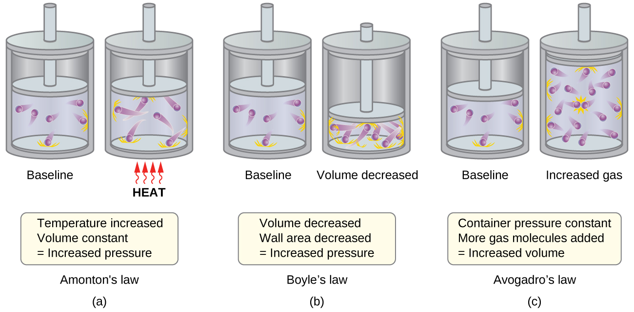 """This figure shows 3 pairs of pistons and cylinders. In a, which is labeled, """"Charles's Law,"""" the piston is positioned for the first cylinder so that just over half of the available volume contains 6 purple spheres with trails behind them. The trails indicate movement. Orange dashes extend from the interior surface of the cylinder where the spheres have collided. This cylinder is labeled, """"Baseline."""" In the second cylinder, the piston is in the same position, and the label, """"Heat"""" is indicated in red capitalized text. Four red arrows with wavy stems are pointing upward to the base of the cylinder. The six purple spheres have longer trails behind them and the number of orange dashes indicating points of collision with the container walls has increased. A rectangle beneath the diagram states, """"Temperature increased, Volume constant equals Increased pressure."""" In b, which is labeled, """"Boyle's Law,"""" the first, baseline cylinder shown is identical to the first cylinder in a. In the second cylinder, the piston has been moved, decreasing the volume available to the 6 purple spheres to half of the initial volume. The six purple spheres have longer trails behind them and the number of orange dashes indicating points of collision with the container walls has increased. This second cylinder is labeled, """"Volume decreased."""" A rectangle beneath the diagram states, """"Volume decreased, Wall area decreased equals Increased pressure."""" In c, which is labeled """"Avogadro's Law,"""" the first, baseline cylinder shown is identical to the first cylinder in a. In the second cylinder, the number of purple spheres has changed from 6 to 12 and volume has doubled. This second cylinder is labeled """"Increased gas."""" A rectangle beneath the diagram states, """"At constant pressure, More gas molecules added equals Increased volume."""""""