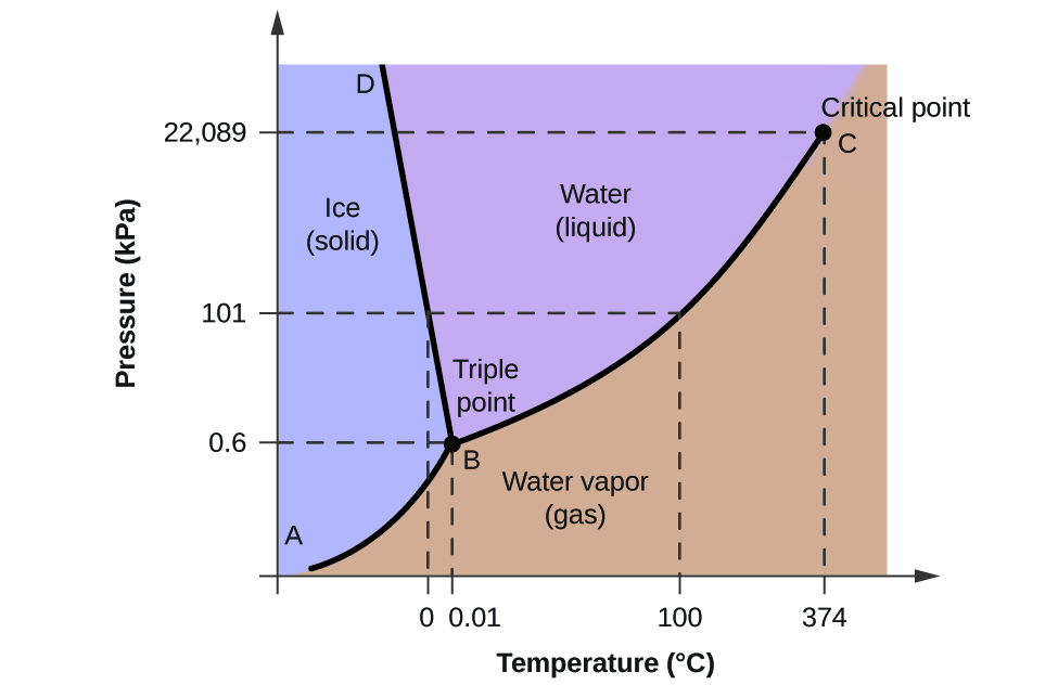 """A graph is shown where the x-axis is labeled """"Temperature in degrees Celsius"""" and the y-axis is labeled """"Pressure ( k P a )."""" A line extends from the origin of the graph which is labeled """"A"""" sharply upward to a point in the bottom third of the diagram labeled """"B"""" where it branches into a line that slants slightly backward until it hits the highest point on the y-axis labeled """"D"""" and a second line that extends to the upper right corner of the graph labeled """"C"""". C is labeled """"Critical point, with a dotted line extending downward to the x-axis labeled 374 degrees Celsius, and another dotted line extending to the y-axis labeled 22,089 k P a. The two lines bisect the graph area to create three sections, labeled """"Ice (solid)"""" near the middle left, """"Water (liquid)"""" in the top middle and """"Water vapor (gas)"""" near the bottom middle. Point B is labeled """"Triple point"""" and has a dotted line extending downward to the x-axis labeled 0.01, and another dotted line extending to the y-axis labeled 0.6. Halfway between points B and C a dotted line extends from the originally discussed line downward to the point 100 degrees Celsius on the x-axis, and another dotted line extends to the y-axis at 101 k P a. Another dotted line extends from this dotted line downward at 0 degrees Celsius."""