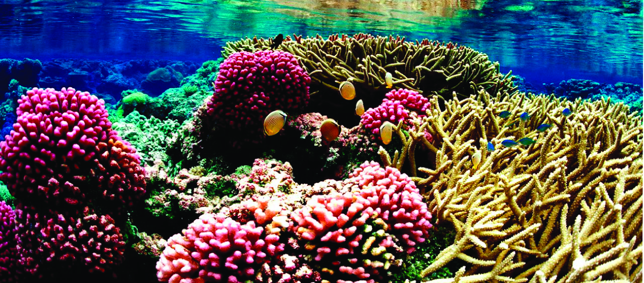 This figure shows an underwater photo of a colorful coral reef.