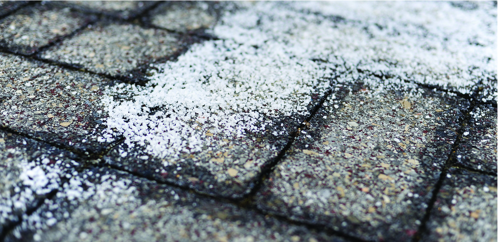 This is a photo of damp brick pavement on which a white crystalline material has been spread.
