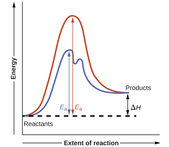 """A graph is shown with the label, """"Extent of reaction,"""" appearing in a right pointing arrow below the x-axis and the label, """"Energy,"""" in an upward pointing arrow just left of the y-axis. Approximately one-fifth of the way up the y-axis, a very short, somewhat flattened portion of both a red and a blue curve are shown. This region is labeled """"Reactants."""" A red concave down curve extends upward to reach a maximum near the height of the y-axis. From the peak, the curve continues downward to a second horizontally flattened region at a height of about one-third the height of the y-axis. This flattened region is labeled, """"Products."""" A second curve is drawn in blue with the same flattened regions at the start and end of the curve. The height of this curve is about two-thirds the height of the first curve and just right of its maximum, the curve dips low, then rises back and continues a downward trend at a lower height, but similar to that of the red curve. A horizontal dashed straight line extends from the point where both curves start in the """"Reactants"""" region. A double sided arrow extends from the """"Products"""" region at the end of both curves to this horizontal dashed line. This is labeled """"capital delta H."""" A double sided arrow extends from the dashed horizontal line to the peak of the red concave down curve. This arrow is labeled """"E subscript a."""" Another double sided arrow extends from the dashed horizontal line to the peak of the blue curve. This arrow is labeled """"E subscript a."""""""