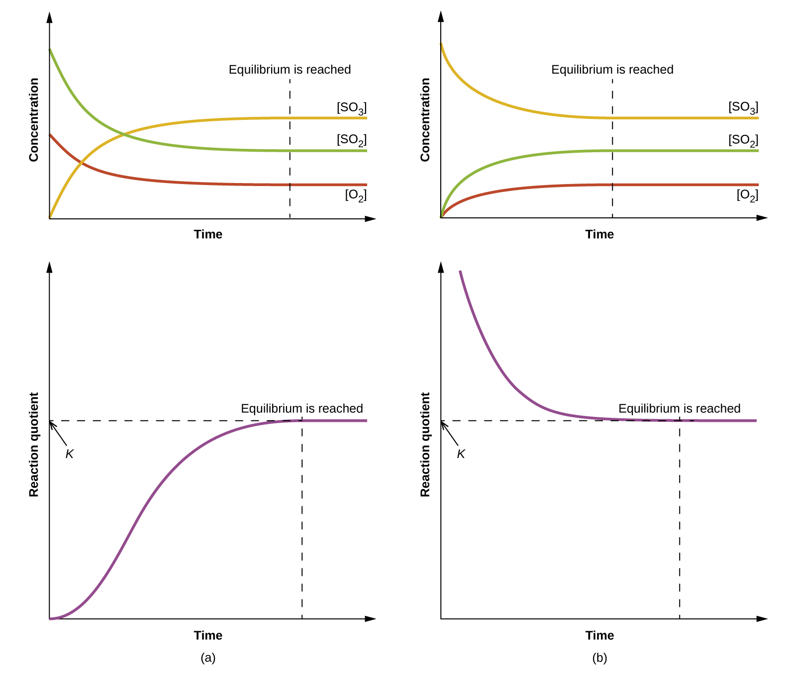"""Four graphs are shown and labeled, """"a,"""" """"b,"""" """"c,"""" and """"d."""" All four graphs have a vertical dotted line running through the middle labeled, """"Equilibrium is reached."""" The y-axis on graph a is labeled, """"Concentration,"""" and the x-axis is labeled, """"Time."""" Three curves are plotted on graph a. The first is labeled, """"[ S O subscript 2 ];"""" this line starts high on the y-axis, ends midway down the y-axis, has a steep initial slope and a more gradual slope as it approaches the far right on the x-axis. The second curve on this graph is labeled, """"[ O subscript 2 ];"""" this line mimics the first except that it starts and ends about fifty percent lower on the y-axis. The third curve is the inverse of the first in shape and is labeled, """"[ S O subscript 3 ]."""" The y-axis on graph b is labeled, """"Concentration,"""" and the x-axis is labeled, """"Time."""" Three curves are plotted on graph b. The first is labeled, """"[ S O subscript 2 ];"""" this line starts low on the y-axis, ends midway up the y-axis, has a steep initial slope and a more gradual slope as it approaches the far right on the x-axis. The second curve on this graph is labeled, """"[ O subscript 2 ];"""" this line mimics the first except that it ends about fifty percent lower on the y-axis. The third curve is the inverse of the first in shape and is labeled, """"[ S O subscript 3 ]."""" The y-axis on graph c is labeled, """"Reaction Quotient,"""" and the x-axis is labeled, """"Time."""" A single curve is plotted on graph c. This curve begins at the bottom of the y-axis and rises steeply up near the top of the y-axis, then levels off into a horizontal line. The top point of this line is labeled, """"k."""" The y-axis on graph d is labeled, """"Reaction Quotient,"""" and the x-axis is labeled, """"Time."""" A single curve is plotted on graph d. This curve begins near the edge of the top of the y-axis and falls steeply toward the x-axis, then levels off into a horizontal line. The bottom point of this line is labeled, """"k."""""""