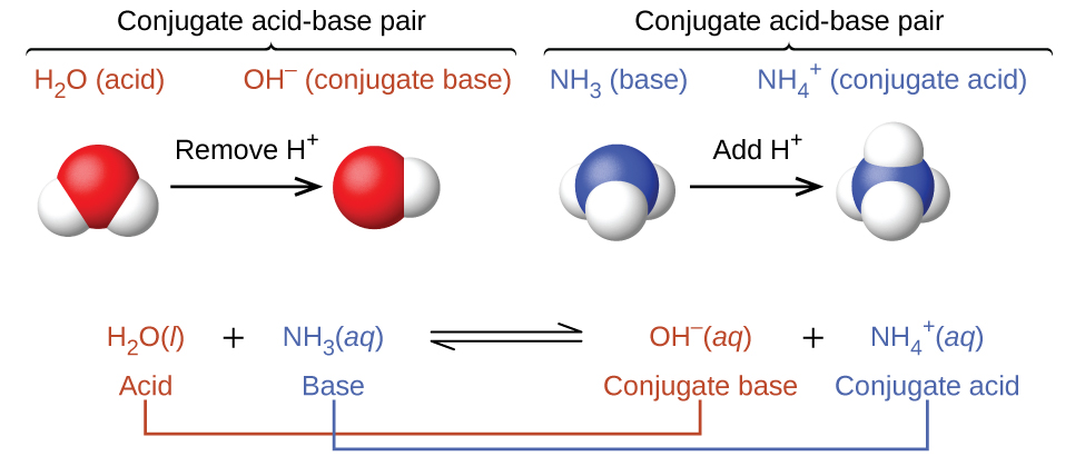 """This figure has two rows. In both rows, a chemical reaction is shown. In the first, structural formulas are provided. In this model, in red, an H atom is connected to an F atom with a single bond. The F atom has pairs of electron dots at the top, right, and bottom. This is followed by a plus sign, which is followed in blue by an O atom which has H atoms singly bonded above and to the right. The O atom has pairs of electron dots on its left and lower sides. A double arrow follows. To the right, in brackets is a structure with a central O atom in blue, with blue H atoms singly bonded above and to the right. A pair of blue electron dots is on the lower side of the O atom. To the left of the blue O atom, a red H atom is singly bonded. This is followed by a plus sign and an F atom in red with pairs of electron dots above, right, below, and to the left. This atom also has a superscript negative sign. The reaction is written in symbolic form below. H F is labeled in red below as """"Acid."""" This is followed by plus H subscript 2 O, which is labeled in blue below as """"Base."""" A double sided arrow follows. To the right is H subscript 3 O superscript plus, which is labeled in blue below as """"Acid."""" This is followed by plus and F superscript negative. The label below in red reads, """"Base."""""""