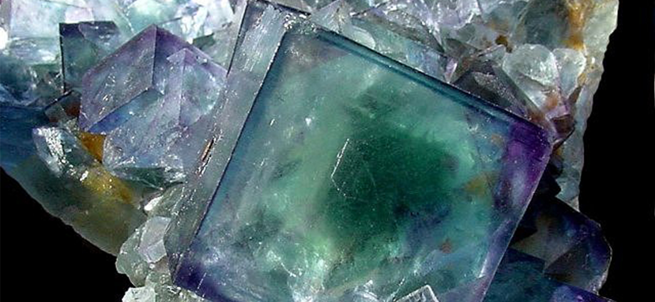 An image is shown of a cluster of clear crystals, showing primarily cubic and some octahedral shapes. A large cubic crystal at the center of the photograph has a deep emerald green center with deep purple corners and a small royal blue region just right of center. A smaller cubic crystal to its left shows purple corners and edges with royal blue coloration toward the center. Similar coloration is seen in other crystals in the structure, though most of the smaller crystals are clear and colorless.