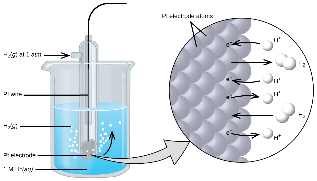 """The figure shows a beaker just over half full of a blue liquid. A glass tube is partially submerged in the liquid. Bubbles, which are labeled """"H subscript 2 ( g )"""" are rising from the dark grayquare, labeled """"P t electrode"""" at the bottom of the tube. Below the bottom of the tube pointing to the solution in the beaker is the label """" 1 M H superscript plus ( a q)."""" A curved arrow points up to the right, indicating the direction of the bubbles. A black wire which is labeled """"P t wire"""" extends from the dark grgrayare up the interior of the tube through a small port at the top. A second small port extends out the top of the tube to the left. An arrow points to the port opening from the left. The base of this arrow is labeled """"H subscript 2 ( g ) at 1 a t m."""" A light greygray points to a diagram in a circle at the right that illustrates the surface of the P t electrode in a magnified view. P t atoms are illustrated as a uniform cluster of grey sgray which are labeled """"P t electrode atoms."""" On the grey atograyace, the label """"e superscript negative"""" is shown 4 times in a nearly even vertical distribution to show electrons on the P t surface. A curved arrow extends from a white sphere labeled """"H superscript plus"""" at the right of the P t atoms to the uppermost electron shown. Just below, a straight arrow extends from the P t surface to the right to a pair of linked white spheres which are labeled """"H subscript 2."""" A curved arrow extends from a second white sphere labeled """"H superscript plus"""" at the right of the P t atoms to the second electron shown. A curved arrow extends from the third electron on the P t surface to the right to a white sphere labeled """"H superscript plus."""" Just below, an arrow points left from a pair of linked white spheres which are labeled """"H subscript 2"""" to the P t surface. A curved arrow extends from the fourth electron on the P t surface to the right to a white sphere labeled """"H superscript plus."""""""