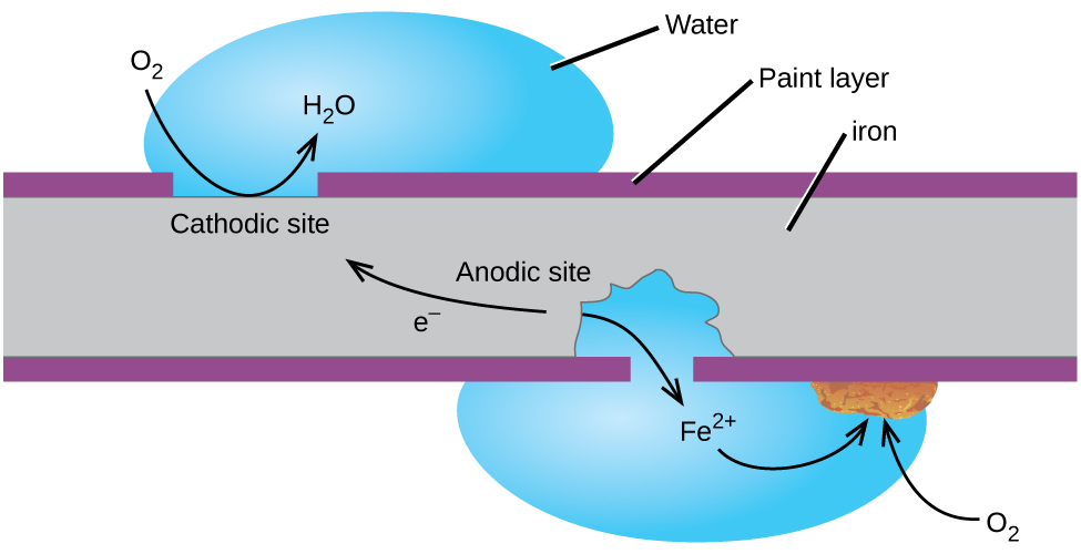 """A grey rectangle, labeled """"iron,"""" is shown with thin purple layers, labeled """"Paint layer,"""" at its upper and lower surfaces. A gap in the upper purple layer at the upper left of the diagram is labeled """"Cathodic site."""" A blue droplet labeled """"water"""" is positioned on top of the gap. A curved arrow extends from a space above the droplet to the surface of the grey region and into the water droplet. The base of the arrow is labeled """"O subscript 2"""" and the tip of the arrow is labeled """"H subscript 2 O."""" A gap to the right and on the bottom side of the grey region shows that some of the grey region is gone from the region beneath the purple layer. A water droplet covers this gap and extends into the open space in the grey rectangle. The label """"F e superscript 2 positive"""" is at the center of the droplet. A curved arrow points from the edge of the grey area below to the label. A second curved arrow extends from the F e superscript 2 positive arrow to a rust brown chunk on the lower surface of the purple layer at the edge of the water droplet. A curved arrow extends from O subscript 2 outside the droplet into the droplet to the rust brown chunk. The grey region at the lower right portion of the diagram is labeled """"Anodic site."""" An arrow extends from the anodic site toward the cathodic site, which is labeled """"e superscript negative."""""""