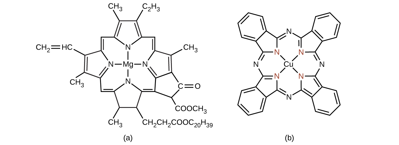Structural formulas are shown for two complex molecules. The first has a central M g atom, to which N atoms are bonded above, below, left, and right. Each N atom is a component of a 5 member ring with four C atoms. Each of these rings has a double bond between the C atoms that are not bonded to the N atom. The C atoms that are bonded to N atoms are connected to C atoms that serve as links between the 5-member rings. The bond to the C atom clockwise from the 5-member ring in each case is a double bond. The bond to the C atom counterclockwise from the 5-member ring in each case is a single bond. To the left of the structure, two of the C atoms in the 5-member rings that are not bonded to N atoms are bonded to C H subscript 3 groups. The other carbons in these rings that are not bonded to N atoms are bonded to groups above and below. A variety of groups are attached outside this interconnected system of rings, including four C H subscript 3 groups, a C H subscript 2 C H subscript 2, C O O C subscript 20, H subscript 39 group, a C H C H subscript 2 group with a double bond between the C atoms, additional branching to form a five-member carbon ring to which an O atom is double bonded and a C O O C H subscript 3 group is attached. The second structure has a central C u atom to which four N atoms that participate in 5-member rings with C atoms are bonded. Unlike the first molecule, these 5-member rings are joined by N atoms between them, with a double bond on the counter clockwise side and a single bond on the clockwise side of each of the four N atoms that link the rings. On the side of each 5-member ring opposite its N atom, four additional carbon atoms are bonded, forming 6-member carbon rings with alternating double bonds. The double bonds are not present on the bonds that are shared with the 5-member rings.