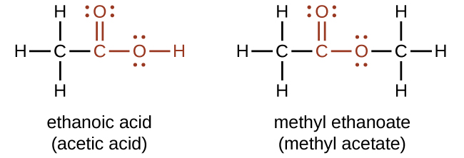 """Two structures are shown. The first structure is labeled, """"ethanoic acid,"""" and, """"acetic acid."""" This structure indicates a C atom to which H atoms are bonded above, below and to the left. To the right of this in red is a bonded group comprised of a C atom to which an O atom is double bonded above. To the right of the red C atom, an O atom is bonded which has an H atom bonded to its right. Both O atoms have two sets of electron dots. The second structure is labeled, """"methyl ethanoate,"""" and, """"methyl acetate."""" This structure indicates a C atom to which H atoms are bonded above, below and to the left. In red, bonded to the right is a C atom with a double bonded O atom above and a single bonded O atom to the right. To the right of this last O atom in black is another C atom to which H atoms are bonded above, below and to the right. Both O atoms have two pairs of electron dots."""