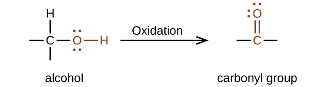 """A reaction is shown. On the left appears an alcohol and on the right, a carbonyl group. Above the reaction arrow appears the word """"oxidation."""" The alcohol is represented as a C atom with dashes to the left and below, an H atom bonded above, and an O atom bonded to an H atom in red connected to the right. The O atom has two sets of electron dots. The carbonyl group is indicated in red with a C atom to which an O atom is double bonded above. Dashes appear left and right of the C atom in black. The O atom has two sets of electron dots."""