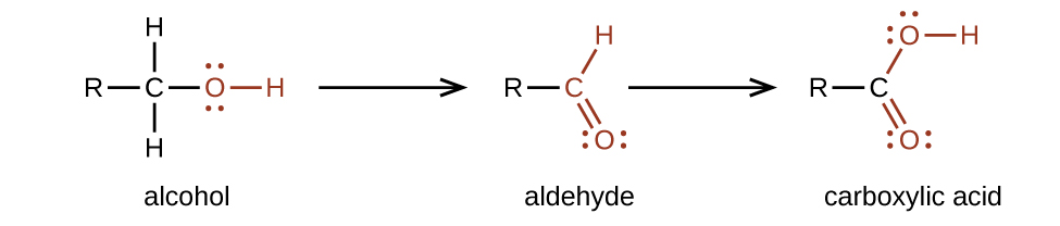A chemical reaction with two arrows is shown. On the left, an alcohol, indicated with a C atom to which an R group is bonded to the left, H atoms are bonded above and below, and in red, a single bonded O atom with an H atom bonded to the right is shown. Following the first reaction arrow, an aldehyde is shown. This structure is represented with an R group bonded to a red C atom to which an H atom is bonded above and to the right, and an O atom is double bonded below and to the right. Appearing to the right of the second arrow, is a carboxylic acid comprised of an R group bonded to a C atom to which, in red, an O atom is single bonded with an H atom bonded to its right side. A red O is double bonded below and to the right. All O atoms have two pairs of electron dots.