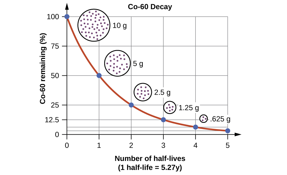 """A graph, titled """"C o dash 60 Decay,"""" is shown where the x-axis is labeled """"C o dash 60 remaining, open parenthesis, percent sign, close parenthesis"""" and has values of 0 to 100 in increments of 25. The y-axis is labeled """"Number of half dash lives"""" and has values of 0 to 5 in increments of 1. The first point, at """"0, 100"""" has a circle filled with tiny dots drawn near it labeled """"10 g."""" The second point, at """"1, 50"""" has a smaller circle filled with tiny dots drawn near it labeled """"5 g."""" The third point, at """"2, 25"""" has a small circle filled with tiny dots drawn near it labeled """"2.5 g."""" The fourth point, at """"3, 12.5"""" has a very small circle filled with tiny dots drawn near it labeled """"1.25 g."""" The last point, at """"4, 6.35"""" has a tiny circle filled with tiny dots drawn near it labeled.""""625 g."""""""