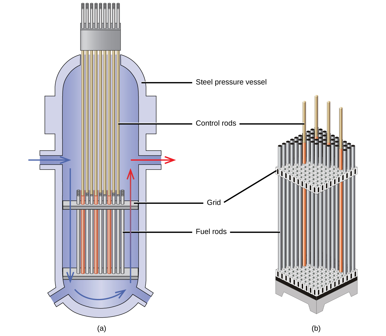 """Two diagrams are shown and labeled """"a"""" and """"b."""" Diagram a shows a cut-away view of a vertical tube with a flat, horizontal plate near the bottom that connects to a series of vertical pipes lined up next to one another and labeled """"Fuel rods."""" A second horizontal plate labeled """"Grid"""" lies at the top of the pipes and a second set of thinner, vertical pipes, labeled """"Control rods,"""" leads from this plate to the top of the container. The walls of the container are labeled """"Steel pressure vessel."""" A blue, right-facing arrow leads from an entry point in the left side of the container and is followed by a second, down-facing blue arrow and a curved, right-facing arrow that trace along the outer, bottom edge of the container. A blue and red arrow follows these and faces up the right side of the container to an exit near the right face where a red, right-facing arrow leads out. Diagram b is a cut-away image of a vertical, rectangular, three dimensional set of vertical pipes. The pipes are labeled """"Fuel rods"""" and are inserted into an upper and lower horizontal plate labeled """"Grid."""" Four thin rods extend above the pipes and are labeled """"Control rods."""