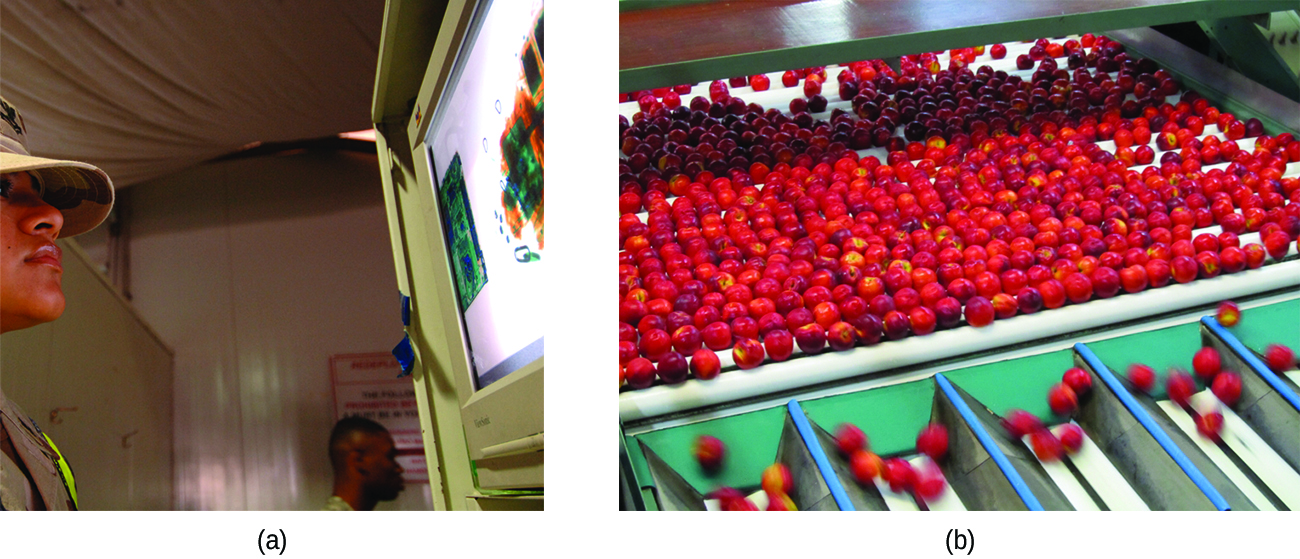 """Two photographs are shown and labeled """"a"""" and """"b."""" Photo a shows a man looking at a lighted image on the wall. Photo b shows strawberries on a conveyor belt dropping into a series of collection chambers."""